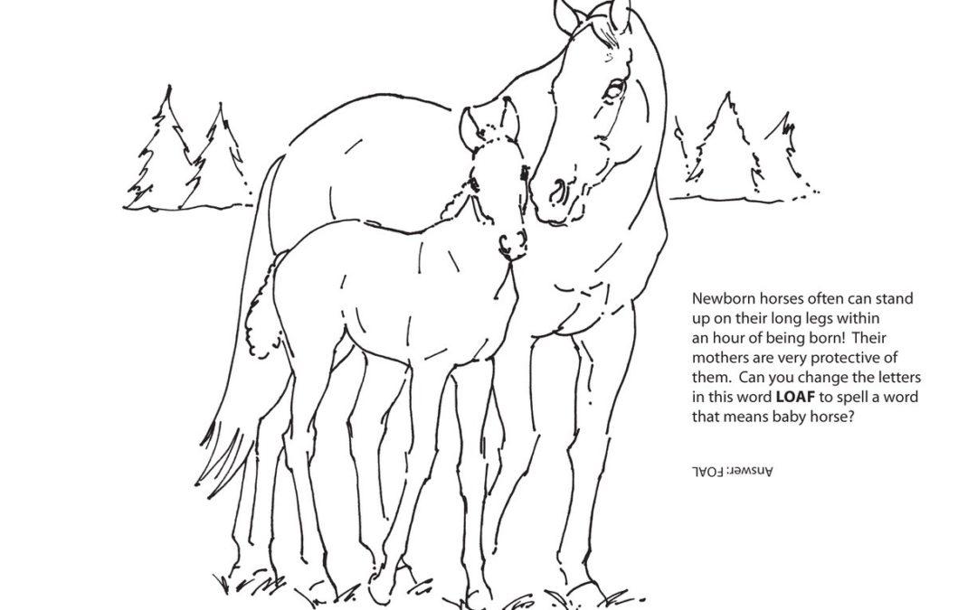 LongRun's Activity Book page 5